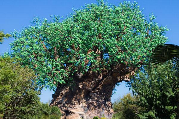 Animal Kingdom - Disney World Park