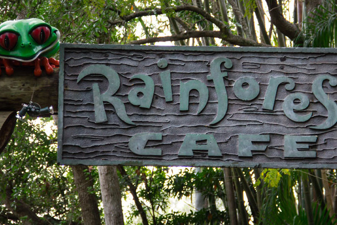 Rainforest Cafe - Animal Kingdom Restaurant