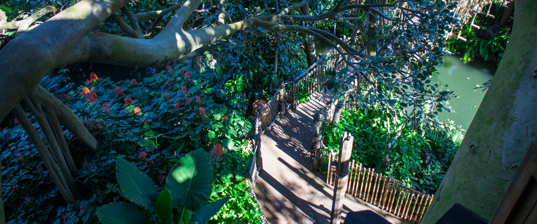 Swiss Family Robinson Treehouse - Magic Kingdom Attraction - Disney World