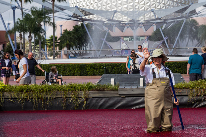 Cranberry Bog - Epcot Food and Wine Festival