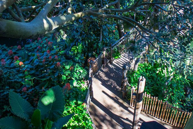 Swiss Family Robinson Treehouse - Magic Kingdom Attraction - Disney World