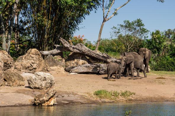 Kilimanjaro Safaris Ride